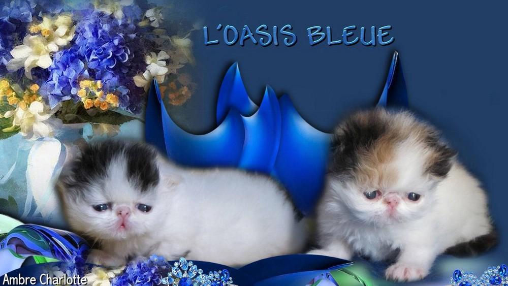magdalena et maely de l`oasis bleue
